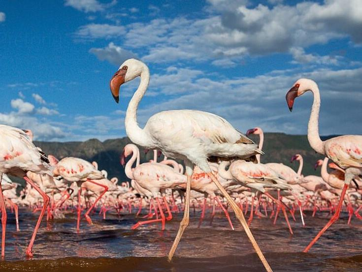"""千姿百态非洲旅游必看的鸟类大景观"""""""