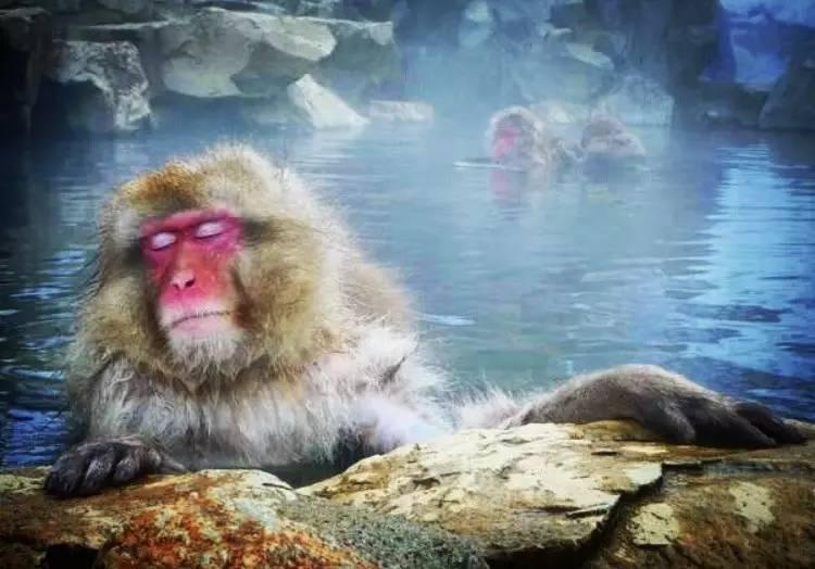 最便宜的猴子_宠物正规猴子多少钱一只哪里有卖猴子的小猴子多少钱一
