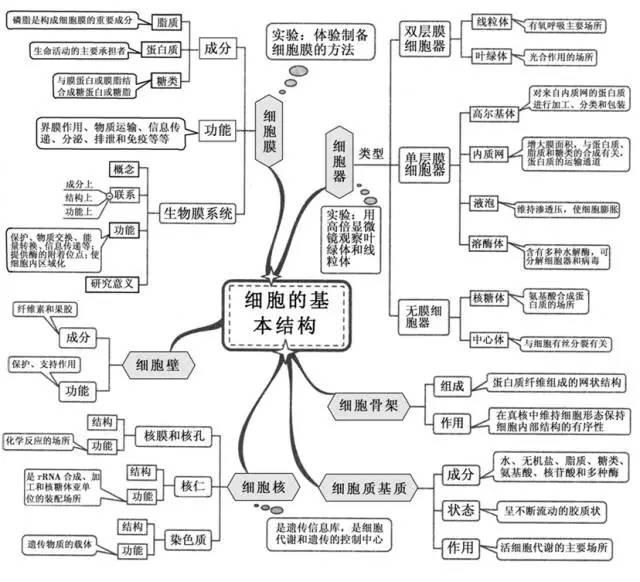 高中生物重点章节思维导图 概念模型 汇总 组图