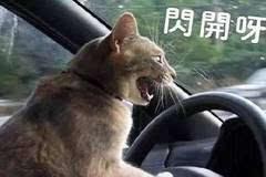 汽车上最容易被忽略的几大功能,但却实用的不行!