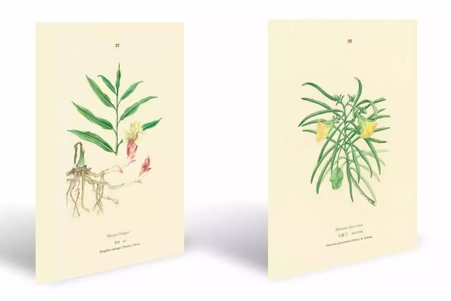 4. 手绘植物卡片 书签