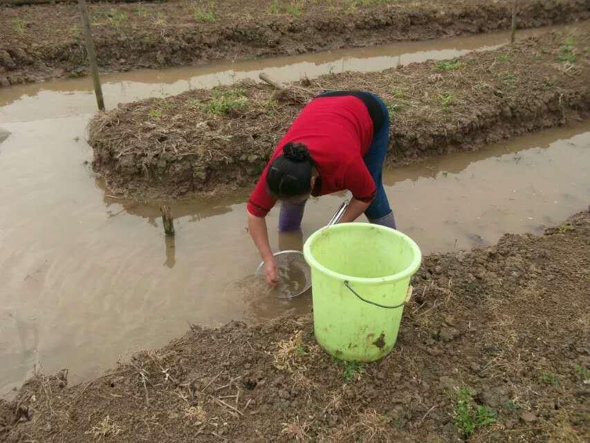 青蛙养殖成功的决定性因素 场地