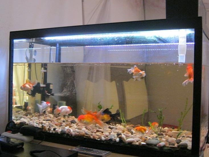 我的鱼缸中间缝隙很大,我要是加满水能不能爆缸,我刚放了一点水,还图片