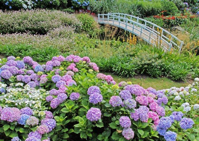 私家庭院景观设计中植物的最佳选择