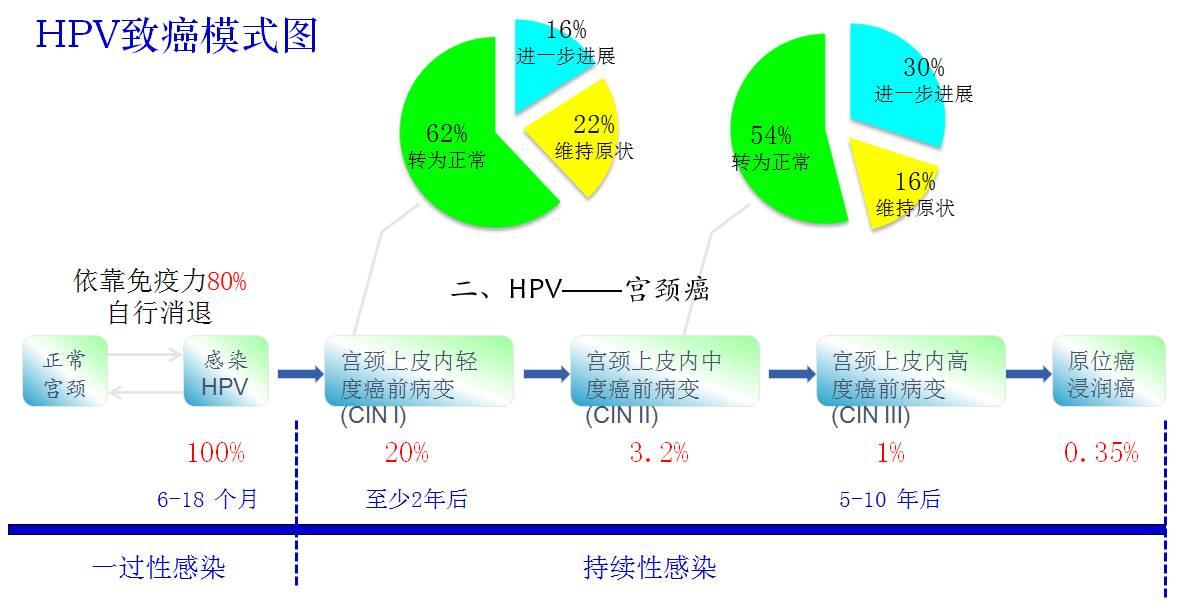 治疗hpv持续感染的药物 hpv病毒是怎么感染的 - 点击图片进入下一页