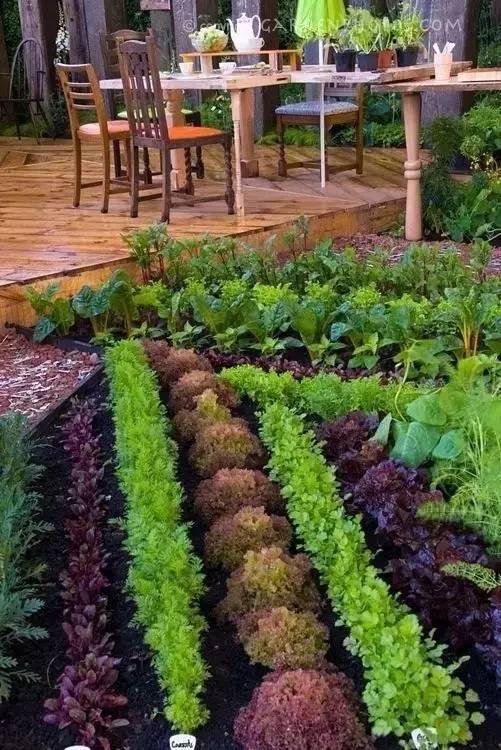有一种花园,叫别人家的菜园图片
