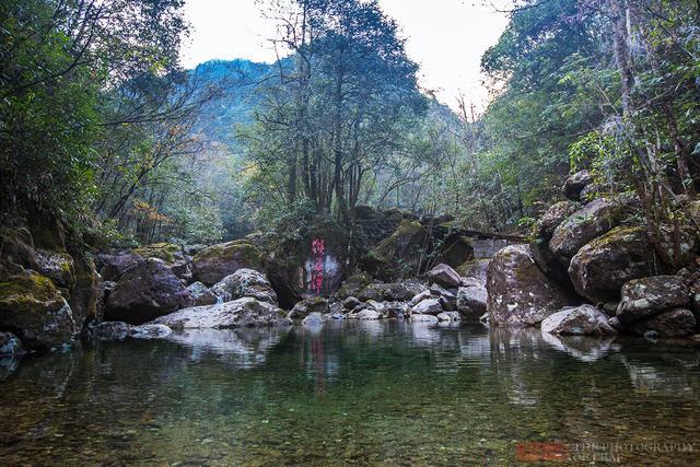 探访浙江温州原始森林乌岩岭,发现野生猕猴,白鹇 - 寒残一叶 - 寒残一叶的博客