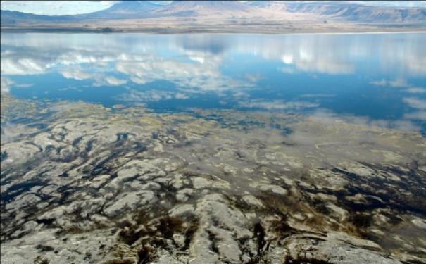 奇景火烈鸟与火山共舞的地方——坦桑尼亚红色盐湖