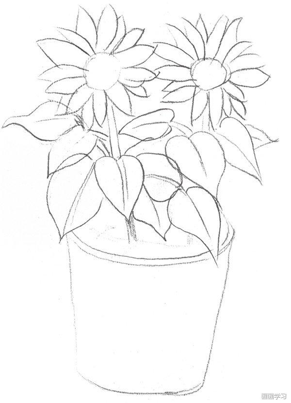 如何学素描 素描太阳花的绘画教程图片