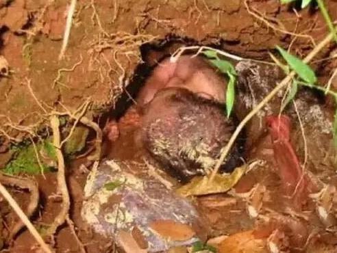 """女子山上干农活,在土堆中发现一名女婴,令人心酸"""""""