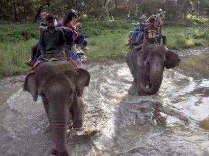 """尼泊尔之旅:在奇特旺密林深处竟然""""晕象""""了!"""""""