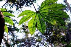 大自然在救人类:植物加速吸收二氧化碳减缓升温