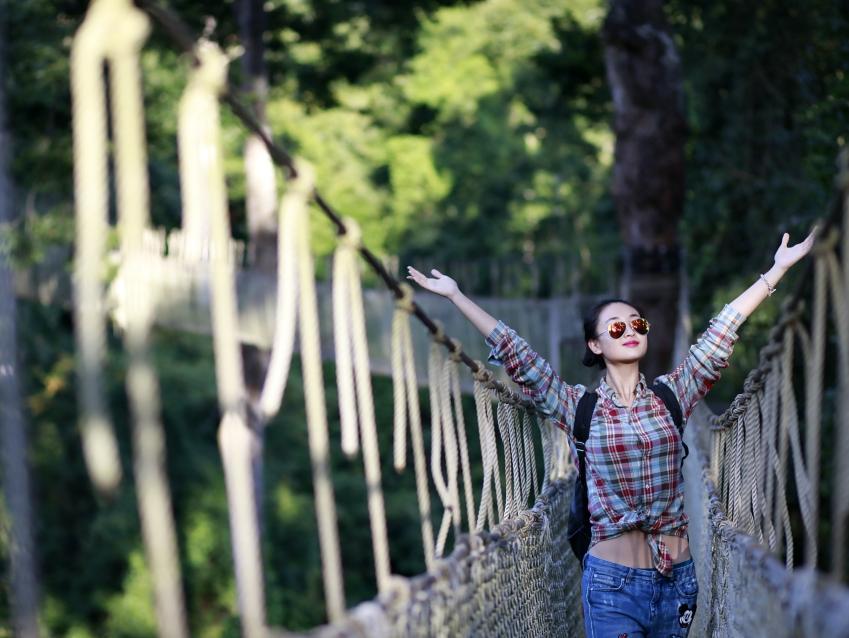 """望天树景区将推出""""拥抱望天树,自然感恩行""""活动"""""""
