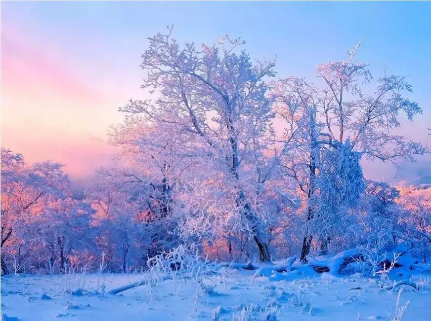 """走进《幻城》里的雪雾森林"""""""