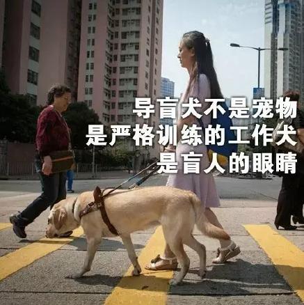 导盲犬狗狗 主人从此我是你的眼,放心的往前走