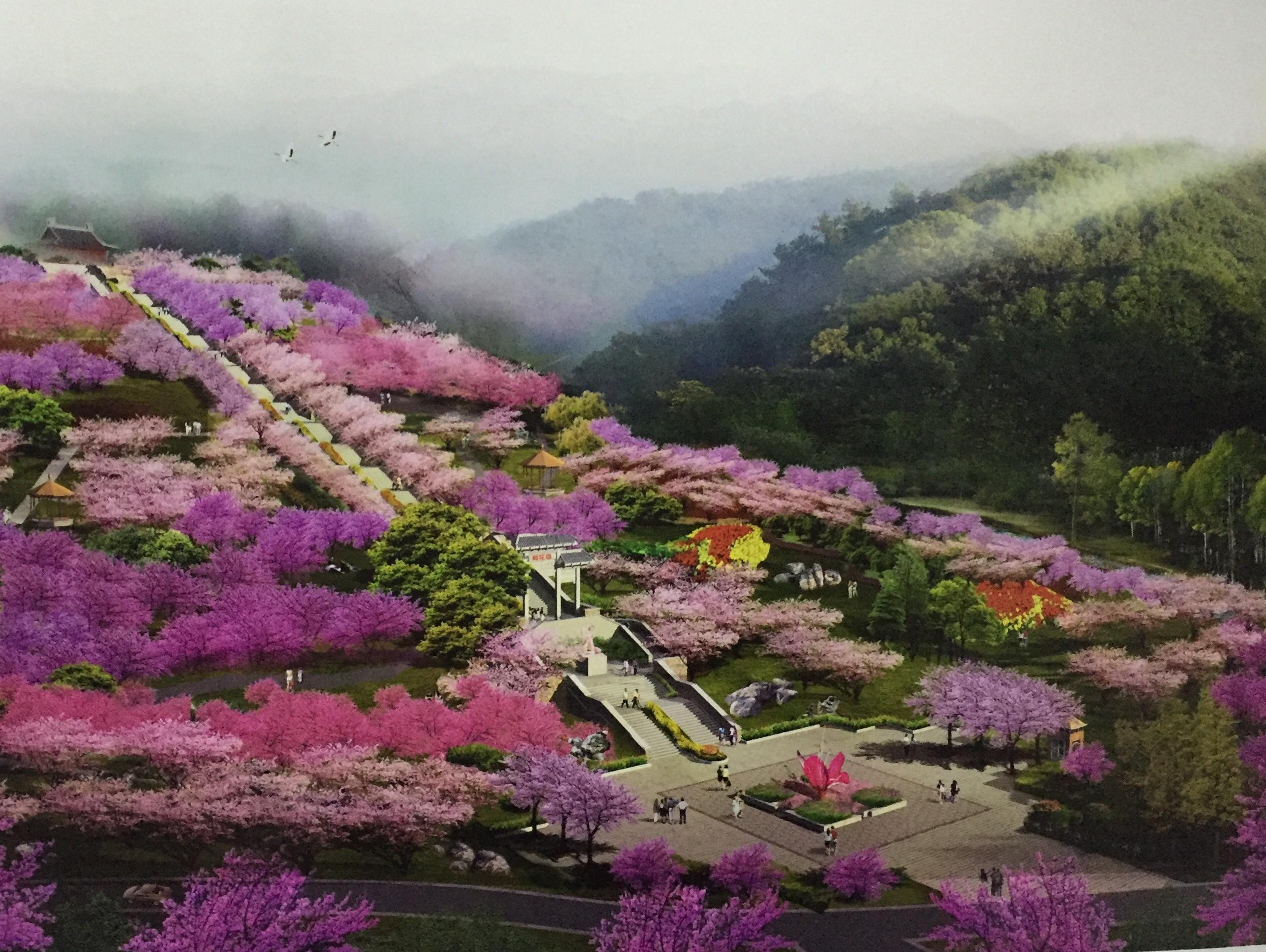 """宜昌最大樱花园在桥边开建"""""""