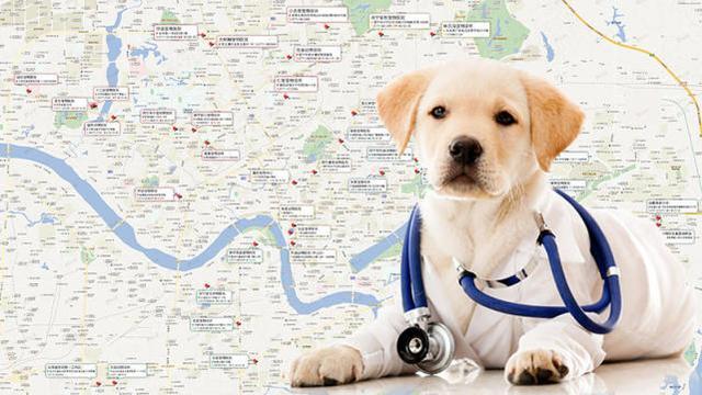 南宁宠物医院中有哪几家比较好的宠物医院