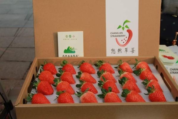 这个除夕带着家人到长安摘草莓