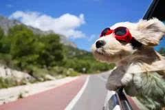 温州司机注意!在高速上开车,这两扇窗户千万别开