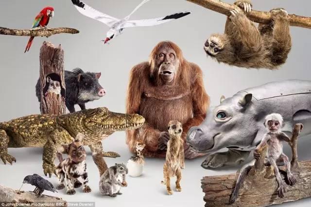 BBC又搞事情!为了拍动物纪录片,他们居然派出这样一支卧底军队 - 浪浪云 - 仰望星空