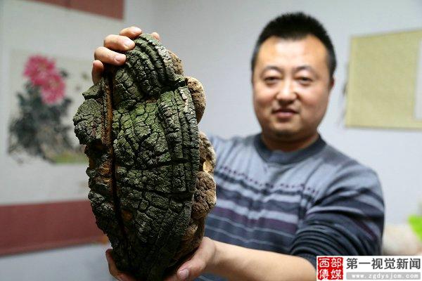 """甘肃平凉一男子偶得百年灵芝有人出5万元求购"""""""