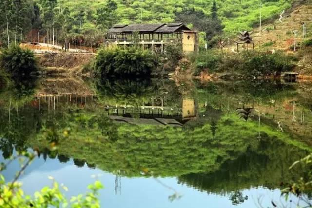 108元/人 | 包独栋温泉别墅,赏梅花枫叶,从化最美乡村图片