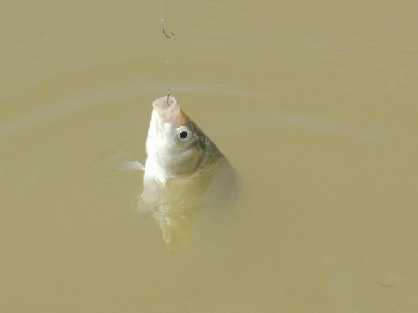 """冬钓中跑鱼的几个主要因素及处理建议"""""""