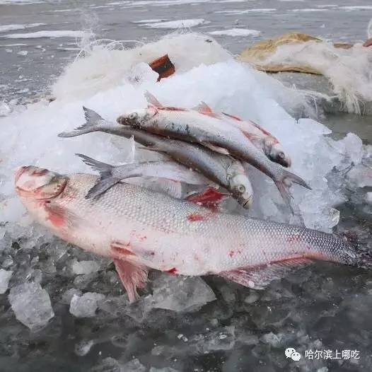 最便宜的鱼_恩平首次出口冻罗非鱼片 预计年出口额可达1.2亿美元