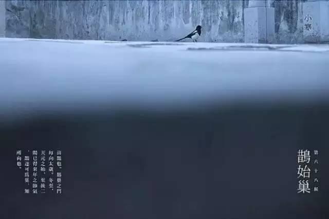碧泉�9�g_雉是野鸡,阳鸟,雊,是求偶声,早春已近,早醒雉鸠开始求偶 1 月 5 日
