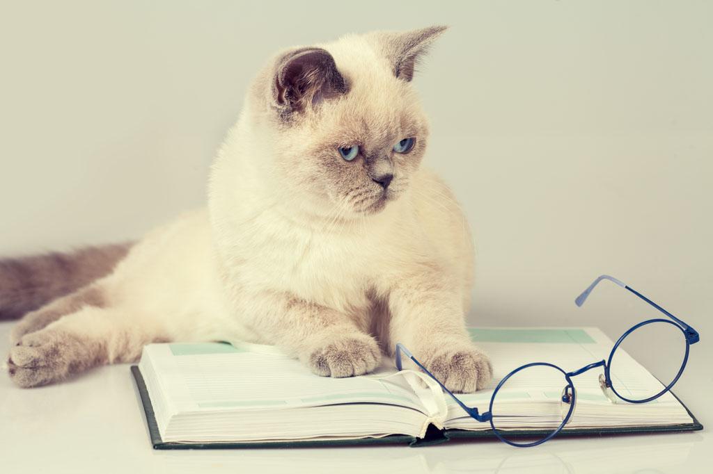 壁纸 动物 狗 狗狗 猫 猫咪 小猫 桌面 1024_682