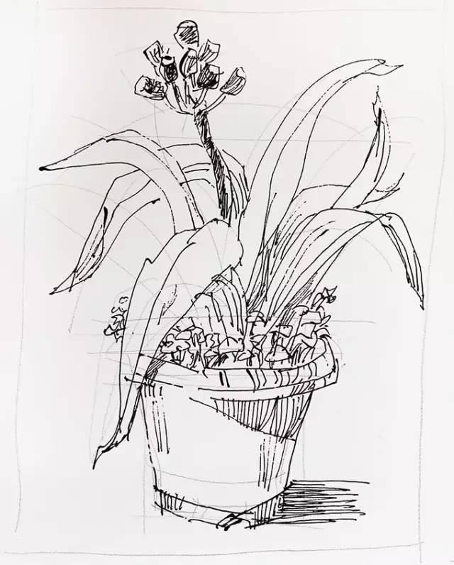 罗克中手绘教程:学会这几点,画速写花草就生动多了!