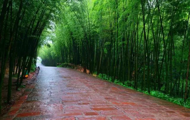 也可以划着竹排,荡漾在竹林溪水间,看竹子鲜翠欲滴,听流水叮咚作响.