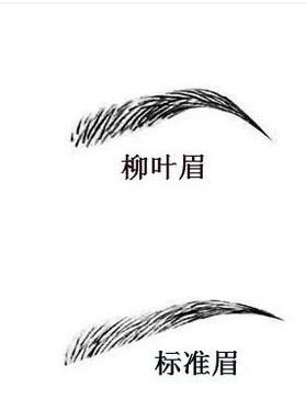 能招财的眉毛面相二:柳叶眉
