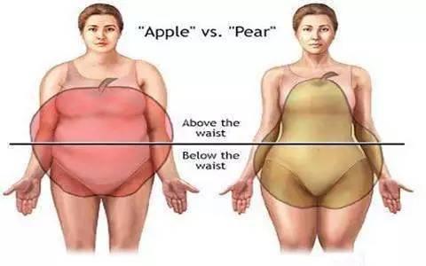 肥胖类型都有哪些?如何合理减肥呢?
