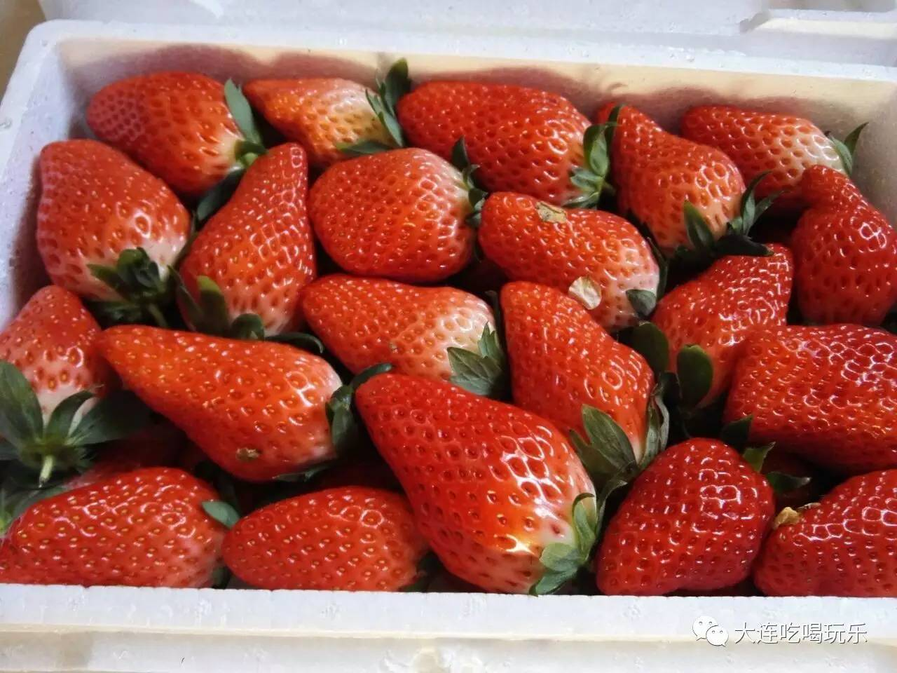 久久牛奶大草莓40一斤,一箱3斤80元      同时还有