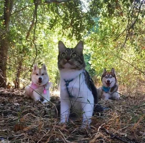 一只跟随二哈一起长大的猫咪,还谱写了一个感人故事-玩意儿