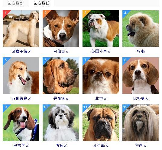 狗的智商排名_狗的智商排名及图片