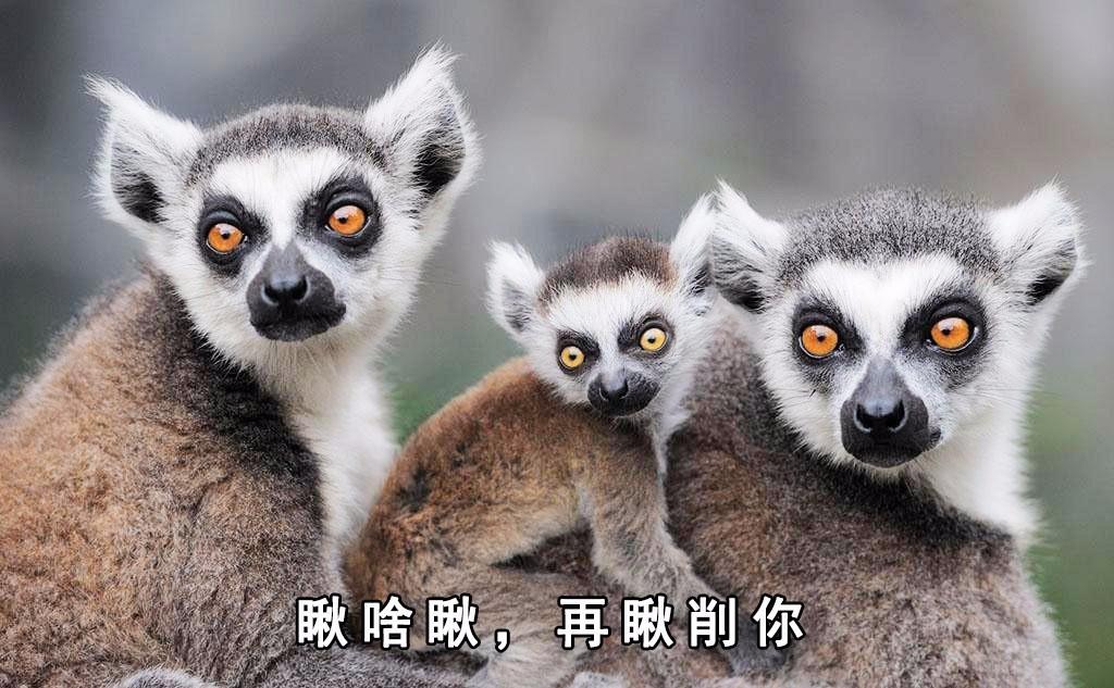 非洲这帮又蠢又萌的动物,个个都是天然表情包!图片