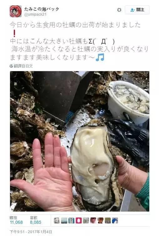 福岛核灾区惊现巨型变异生蚝?长得大,不可以吗?!