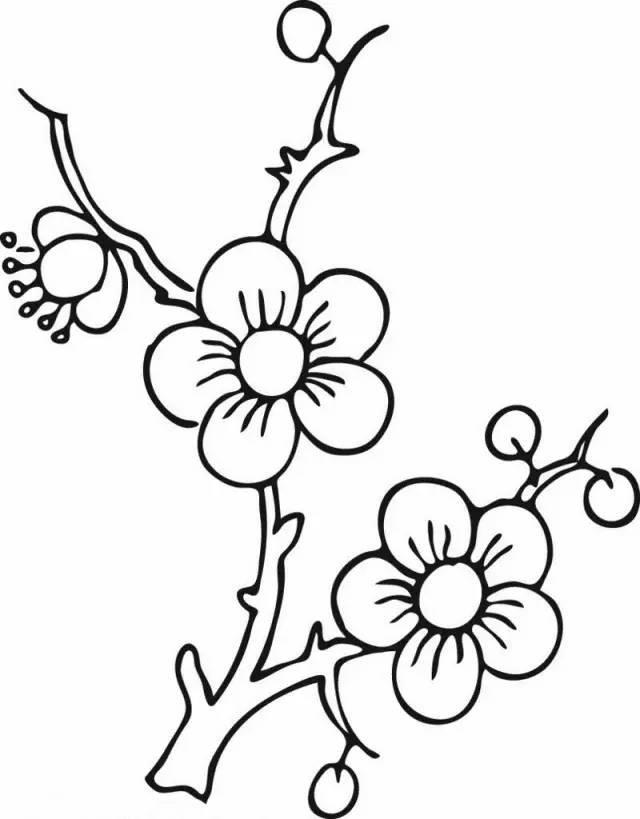 手工篇  各种植物简笔画大全,画画之余还能学到知识!