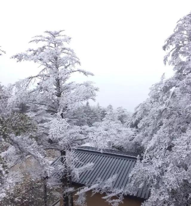"""推开窗户就看见了成都的""""初雪""""?周边这10个地方早就白啦!图片"""