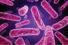 Nature子刊:解析关键细菌蛋白或有望开发出新型抗生素