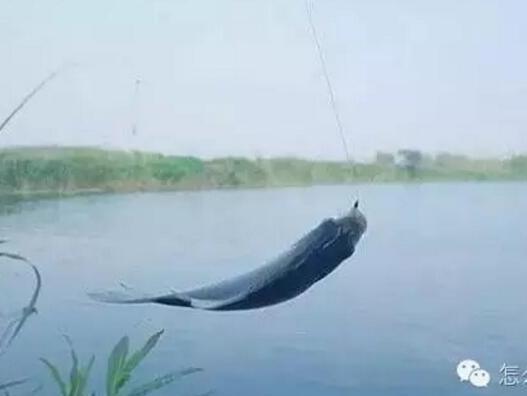 对付猾鱼不上钩,从线组到浮漂都需要调整!