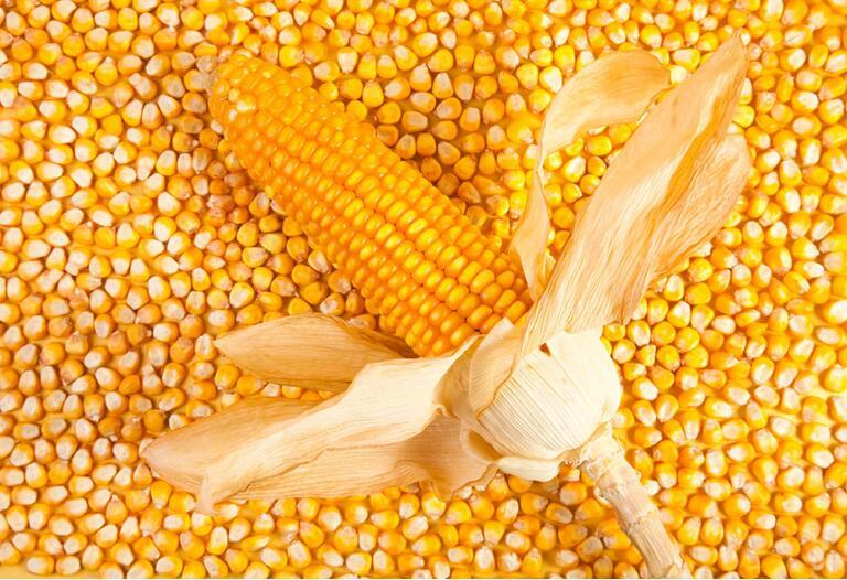 2017玉米粒十大品牌排行榜玉米粒哪一个牌子好