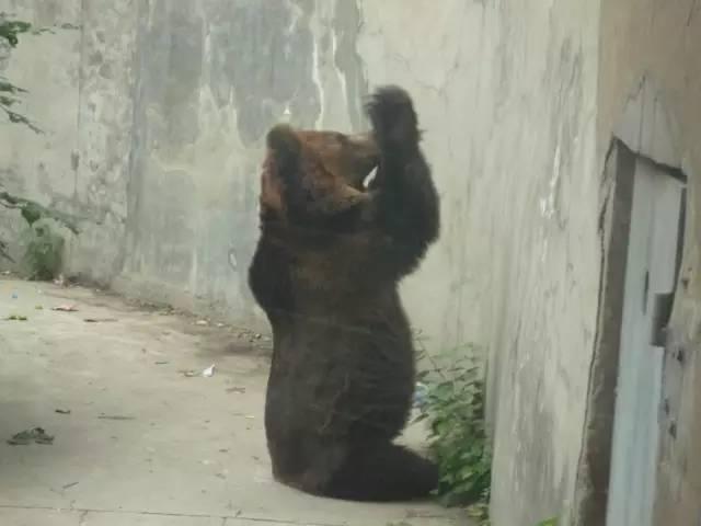 有哪些动物园里的动物,过得比较悲剧?