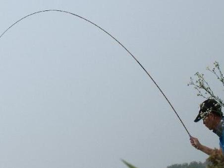 竹钓鱼竿适用的鱼群分析