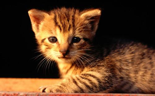 猫咪拉稀可以驱虫吗图片