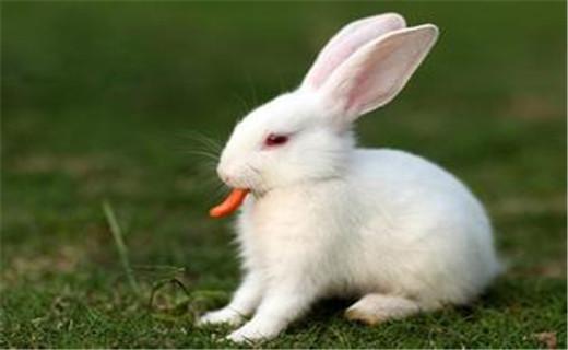 乌龟壁纸动物520_320兔子夜里闹图片