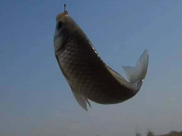 钓鱼打新窝诱鱼成功到爆护的五大妙招!