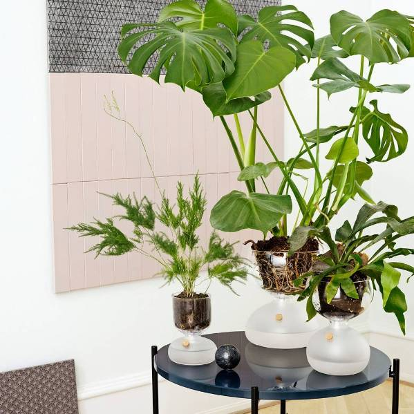 盆景 盆栽 植物 599_599